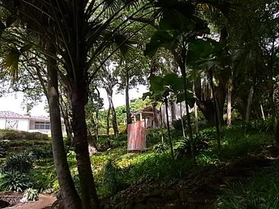 Hawaii_life_257