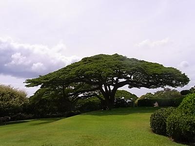 Hawaii_life_279